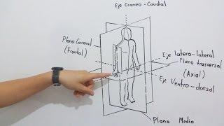 introduccin-a-la-anatoma