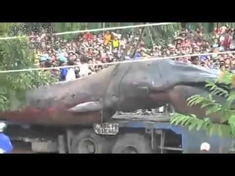 weird creature found in vietnam 2013 youtube