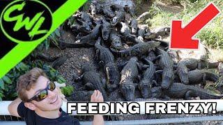 feeding-frenzy