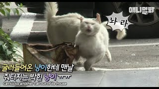 Cat can't even claim its own home ㅠㅠ