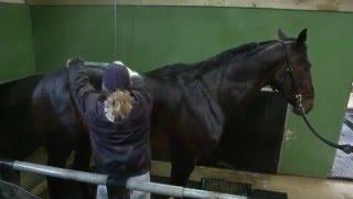 Le Haras de Sassy : Balnéothérapie équine