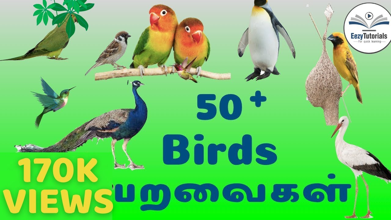 50 Birds Name In Tamil And English Youtube