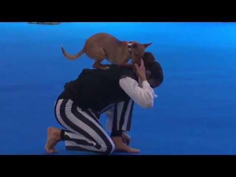 2ª Edição DOG TALENT - Rute Alves & Flash - Classe Dog Dancing & Freestyle - 1º CLASSIFICADO
