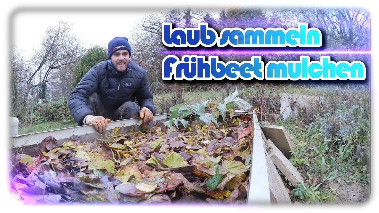 Laub sammeln und Beete winterfest machen | Frühbeet und Artischoke ...