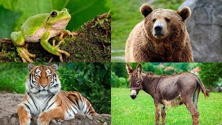 Learn Animal Sounds for Children | Learn Animals Names For Kids And Toddlers | Animal Sound Video