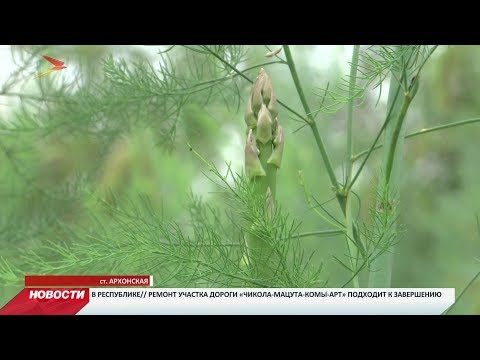 Смотреть В Северной Осетии появилась крупнейшая в России плантация спаржи онлайн
