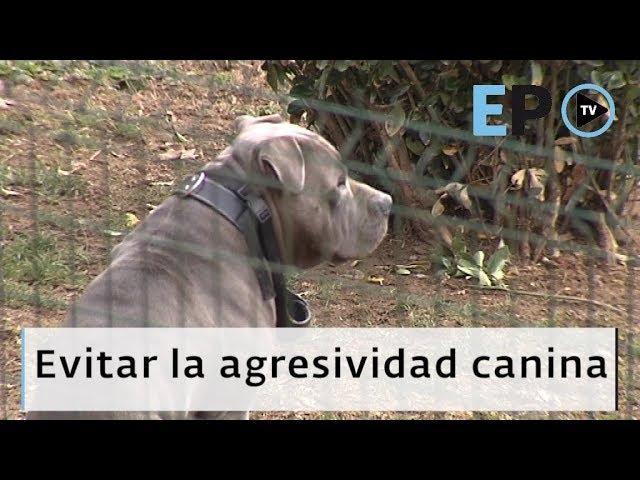 El Progreso TV ► ¿Cómo evitar la agresividad canina?