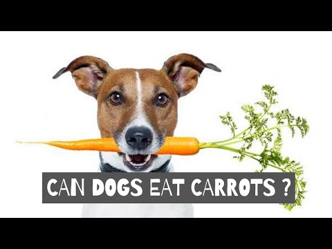 can-dogs-eat-carrots?-are-carrots-good-for-dogs?