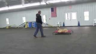 Alden's Kennels Dog Training & Dog Boarding Huntley Il.