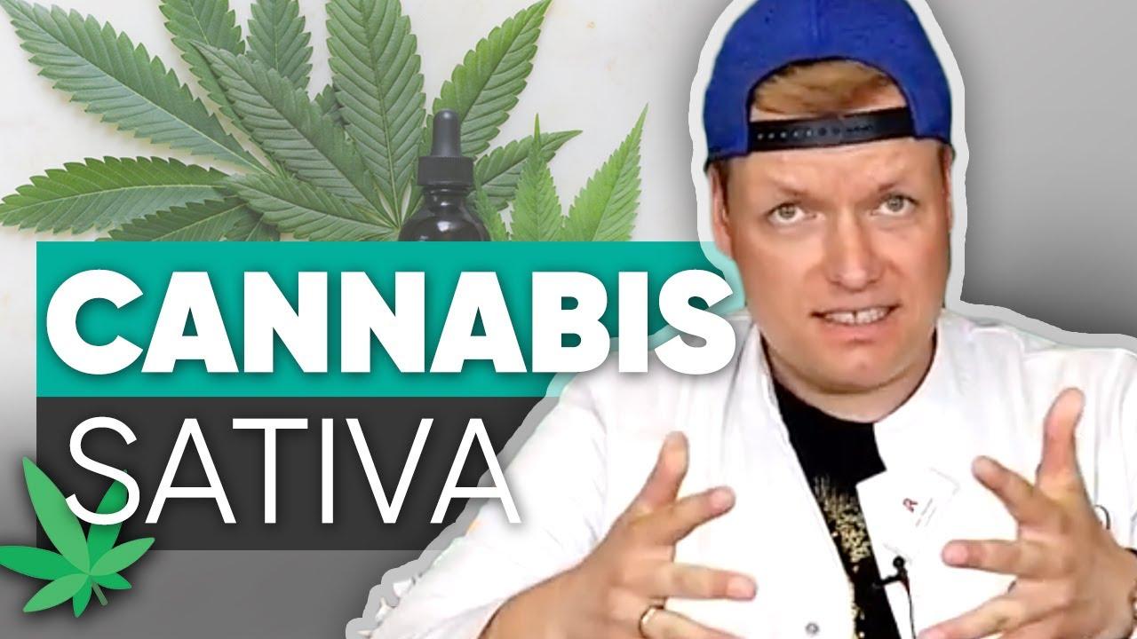 Cannabis für alle: Ist die Cannabis-Legalisierung überfällig?
