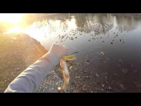 Bass Fishing At Newton Lake NJ