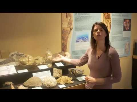 Cincinnati Under the Sea with Brenda Hunda: Ordovician Sea Animals & Their Descendants