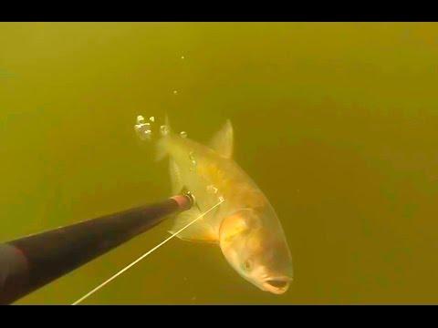 охота рыбалка толстолобик