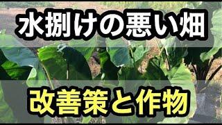 【水捌けの悪い畑】改善策と適した作物【家庭菜園・新規就農】
