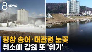 평창 송어 · 대관령 눈꽃 못 즐긴다…강원 또 위기 /…