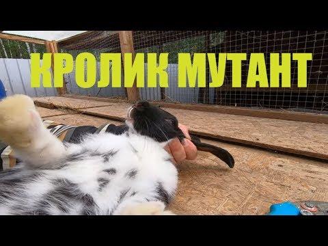 КРОЛИК МУТАНТ