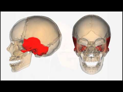 axial skeleton the skull basics youtube