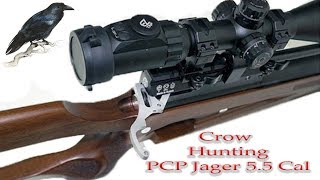 Crowhunting and Hunt for a forest pigeon PCP Jager 5.5 Cal