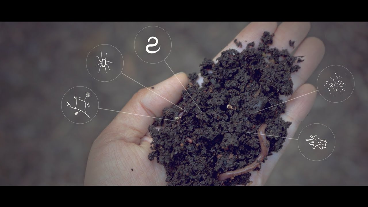 Soil Solutions to Climate Problems - Narrated by Michael Pollan