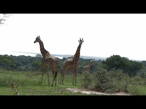 Trip to Murchison Falls National Park and Chobe Safari Lodge