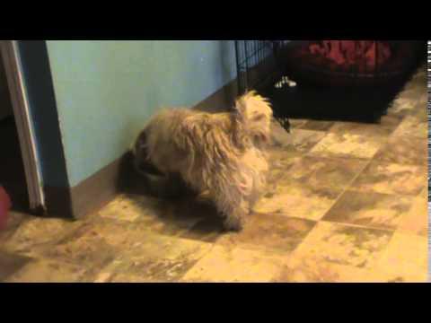 Baxter bathing Luvfurmutts Animal Rescue Dogs