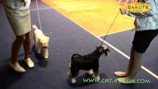 Выставка собак, Харьков, 30 октября 2016, видео 4