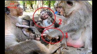 Full Bad Female Monkey! Mom Jill break heart cos baby Brotus Jr cry seizure -Donnie hurt very much.
