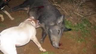 South Texas Hog Hunting