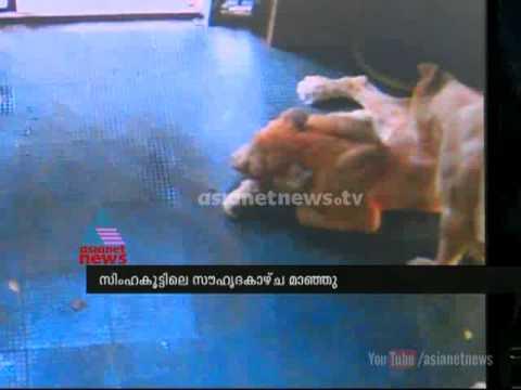 Lioness Seena dies in Trivandrum zoo