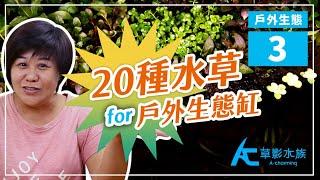 你期待的來了!戶外生態缸能種的「20種水草」推薦給你!|AC草影水族