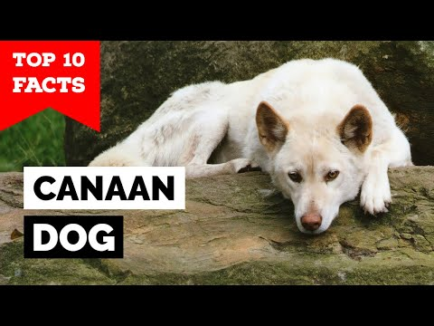Canaan  Top 10 Facts