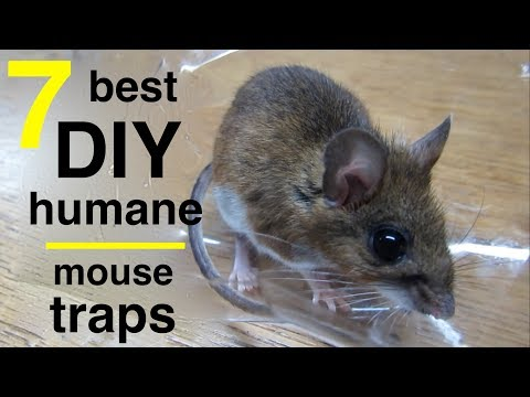 7 Best DIY Mousetraps ●  All Capture And Release !