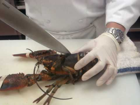 Kitchen Nightmares Us Maine Lobster