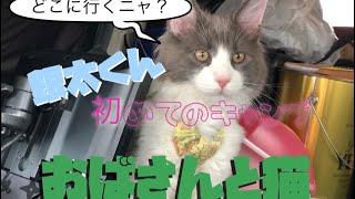 【11にゃー】生後4ヶ月初めての猫キャンプ