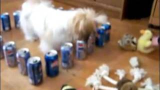 Silly Dog Stuck in a Soda Can Barricade