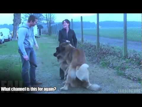 Perturber l'accouplement des chiens interview - YouTube