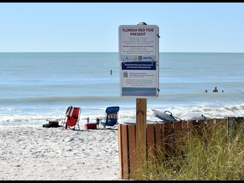 What Is Red Tide And Why It Is Harmful?