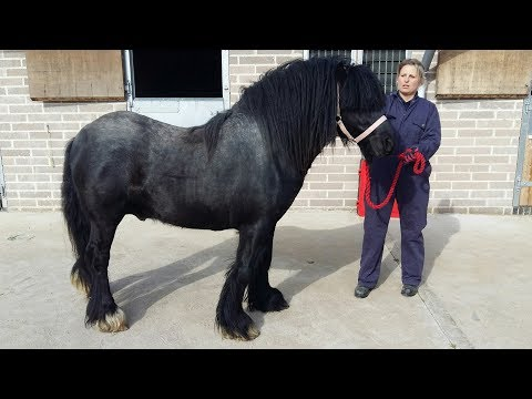 Grossly overweight abandoned pony goes through amazing transformation