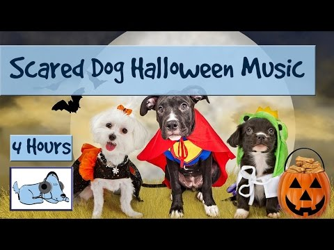 calming-music-for-dogs-afraid-of-halloween-trick-or-treat!-de-stress-your-dog-on-halloween!