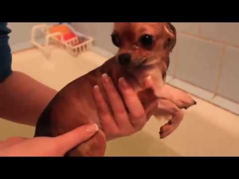 REALLY CUTE ANIMALS cute little dogs air swimming