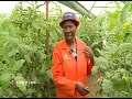 How to start Greenhouse Farming in Kenya – part 1