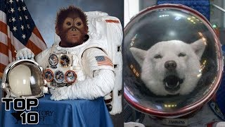 Top 10 Animals That Survived In Space