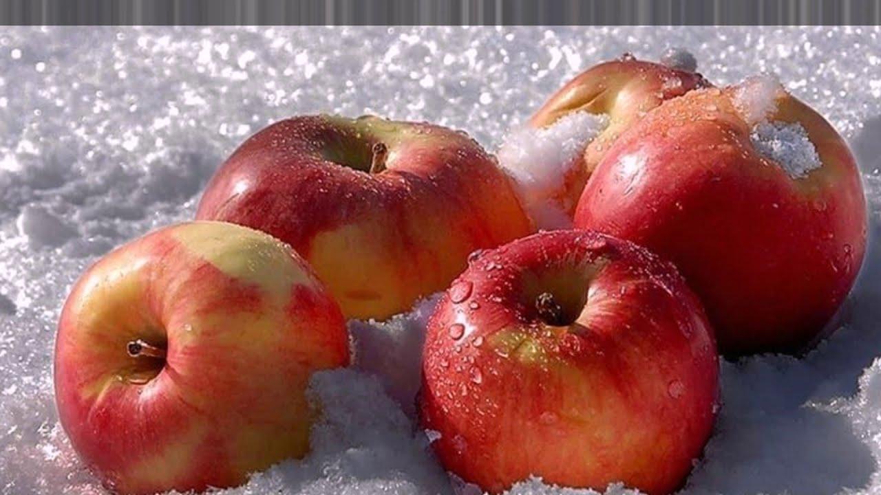 Зимние сорта яблок, хранящиеся до весны