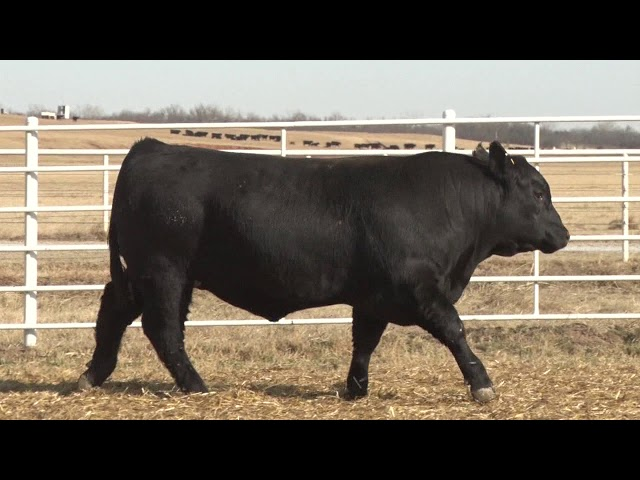 Express Ranches Lot 479