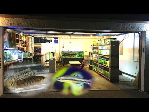 Wild Fish Tank Room Tour - Garage Fish Room