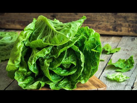 Dr. Oz On The 2018 E. Coli Outbreak Linked to Romaine Lettuce