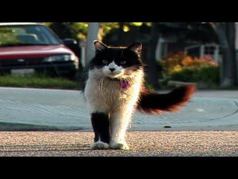 The Amazing Adventure of Marchello the Cat (Trailer)