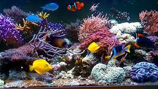 akwarium morskie – transmisja na żywo