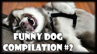 Funny Dogs Compilation #2 | Try Not To Laugh Challenge | Funny Dog Videos & Vines 2018