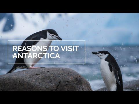 11 Reasons to Visit Antarctica Now